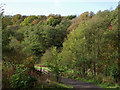 SO8992 : Deciduous woodland in Baggeridge Country Park near Sedgley by Roger  Kidd