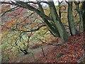 SE7196 : Valley slope, autumn by Pauline E