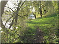 SJ6565 : Willow fringed lakeside path at Bottom Flash by Dr Duncan Pepper