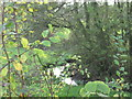 SJ6166 : Shays Lane Brook behind Brook Farm by Dr Duncan Pepper