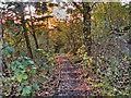 SJ9482 : Path into Poynton Coppice by David Dixon