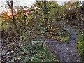 SJ9482 : Woodland Walk, Poynton Coppice by David Dixon