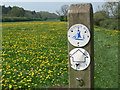 SO7488 : Severn Way and dandelions by Mat Fascione