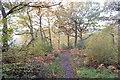 TQ8189 : Oaks in Tile Woods by John Myers