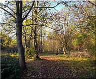 TQ1372 : London Loop in Crane Park by Des Blenkinsopp