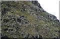 NY2211 : Sheep traversing Base Brown by Karl and Ali