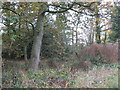SJ6863 : Field-Woodland boundary by Dr Duncan Pepper
