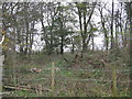 SJ6864 : Inside Stove Room Wood by Dr Duncan Pepper