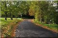 TQ2750 : Elm Road by Ian Capper