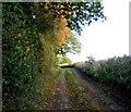SU4578 : Track off Sheepleaze Lane by Fly