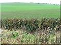 SE9992 : Greening hillside, west of High Barmer by Christine Johnstone