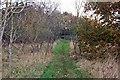 TM0005 : Footpath through a spinney, Packards Grove by Trevor Harris