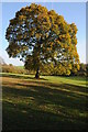 SO4312 : Oak tree in Autumn colours by Philip Halling