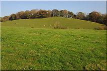 SO4313 : Farmland near Llanvihangel-Ystern-Llewern by Philip Halling