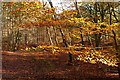 SU9486 : Heathfield Wood by Graham Horn
