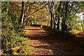 SU9784 : Bridleway around Brockhurst Wood by Graham Horn