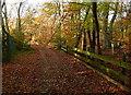 SU9784 : Footpath through Brockhurst Wood by Graham Horn