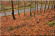 J3268 : Autumn leaves, Minnowburn, Belfast (2) by Albert Bridge