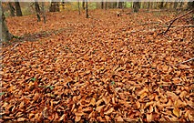 J3268 : Autumn leaves, Minnowburn, Belfast (3) by Albert Bridge
