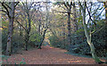 TQ4193 : Monkhams Lane by Roger Jones