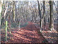 TL8202 : Path in Scotts Wood by Roger Jones