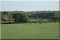 SP1765 : Cattle grazing near Church Farm by Robin Stott