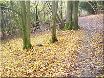 TQ1350 : Leaf Litter, North Downs Way by Colin Smith