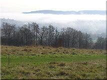 TQ1450 : Denbies Hillside by Colin Smith