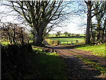 H4376 : Lane, Mountjoy by Kenneth  Allen