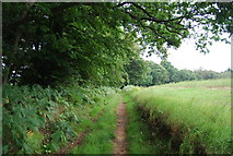 SU7824 : Sussex Border Path heading north by N Chadwick