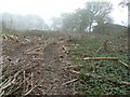 TQ0838 : Cleared wood by Bowles Farm by Dave Spicer