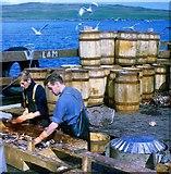 HU4841 : Norwegian klondykers curing herring in Bressay Sound by Robert W Watt