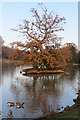 TQ5939 : Tree island in Dunorlan Park lake by Oast House Archive