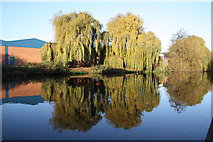 SK5537 : Weeping Willows by Richard Croft