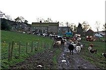 SE7296 : Rural Gridlock, Heygate Farm, Rosedale by Paul Buckingham