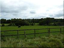 SU6017 : South Downs Society Green Travel Walks Week (208) by Basher Eyre