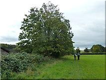 SU6017 : South Downs Society Green Travel Walks Week (212) by Basher Eyre