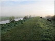TL4279 : New Bedford River by Hugh Venables