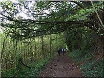 SU6017 : South Downs Society Green Travel Walks Week (232) by Basher Eyre