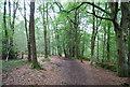 SU7926 : Sussex Border Path, Rake Hanger by N Chadwick