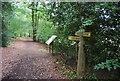 SU7927 : Footpath junction, Rake Hanger by N Chadwick