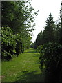 SJ8071 : 'Pluto Avenue' Jodrell Bank Arboretum by Peter Turner