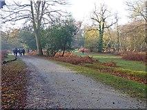 SU2609 : Autumn near Wick Wood by Mike Smith