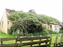 X1277 : Derelict thatched cottage at Prospect Hall by ethics girl