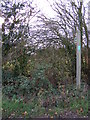 TM2379 : Footpath to Hoxne Road by Geographer