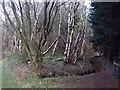 NT5267 : Blawearie Wood by Richard Webb
