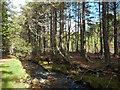 NH9110 : Island in Am Beabaidh, Rothiemurchus campsite by Phil Champion