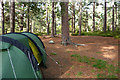 NH9110 : Camped beneath the pines by Phil Champion