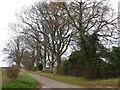 TF7319 : Trees near Gayton in Norfolk by Richard Humphrey