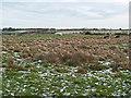 NZ1228 : Field near High Stonechester by Trevor Littlewood